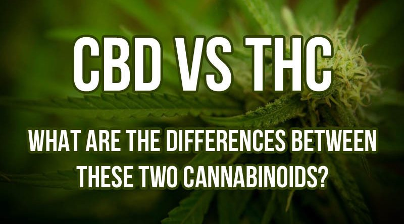 Hemp Oil vs. Cannabis: Why You Need to Know the Difference